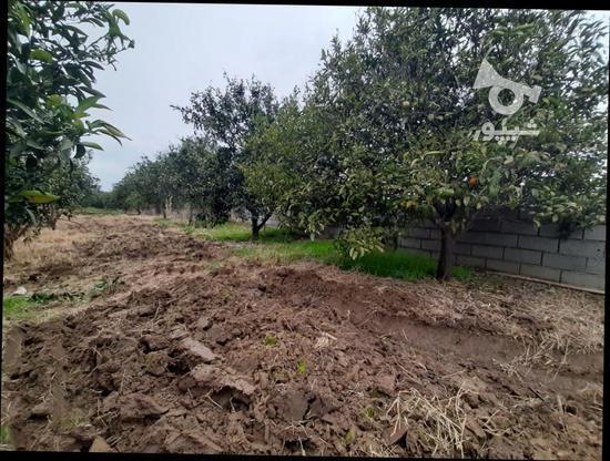 زمین باغی   1400متر  در گروه خرید و فروش املاک در مازندران در شیپور-عکس2
