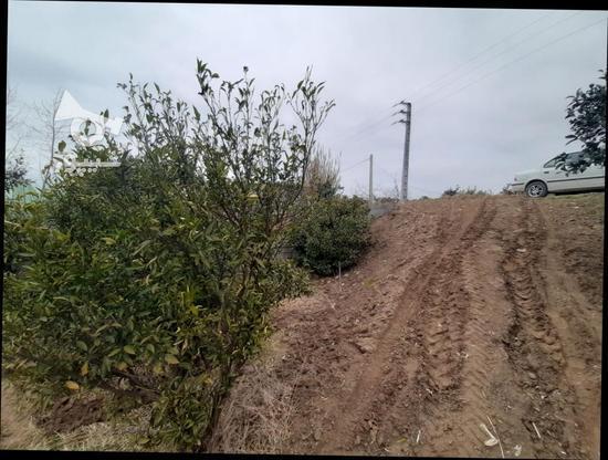 زمین باغی   1400متر  در گروه خرید و فروش املاک در مازندران در شیپور-عکس1