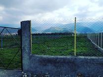 فروش زمین باغی کوچه فیفا در شیپور