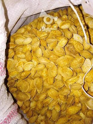 بادام درختی پوست کاغذی در گروه خرید و فروش خدمات و کسب و کار در آذربایجان شرقی در شیپور-عکس1