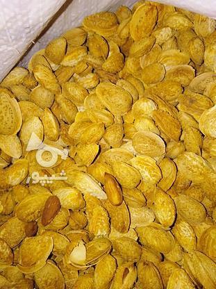 بادام درختی پوست کاغذی در گروه خرید و فروش خدمات و کسب و کار در آذربایجان شرقی در شیپور-عکس2