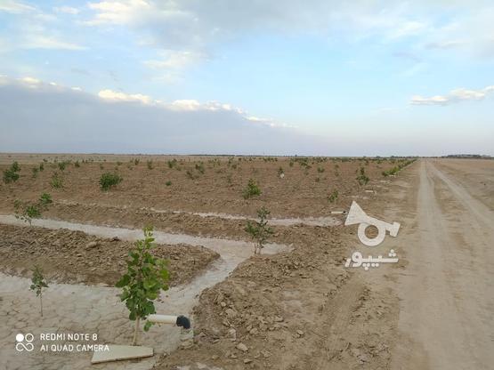500 متر زمین پسته کاری شده  در گروه خرید و فروش املاک در اصفهان در شیپور-عکس8