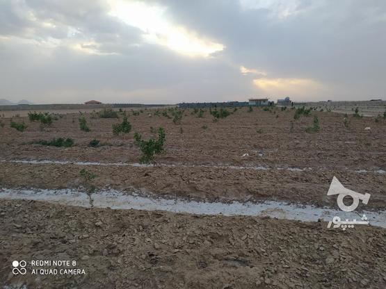 500 متر زمین پسته کاری شده  در گروه خرید و فروش املاک در اصفهان در شیپور-عکس5