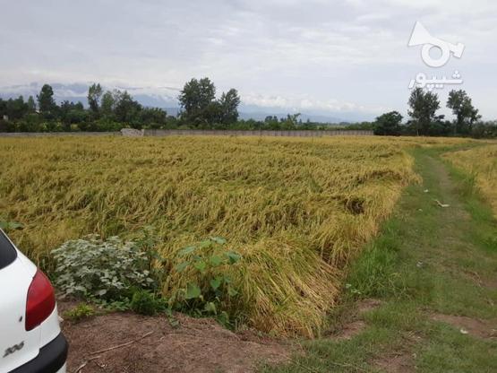 یه پلاک زمین.حاشیه 18 متر4مترکوچه در گروه خرید و فروش املاک در مازندران در شیپور-عکس3