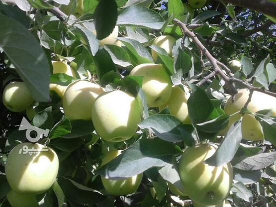 باغ.سیب.درقشلاق در گروه خرید و فروش املاک در آذربایجان غربی در شیپور-عکس1
