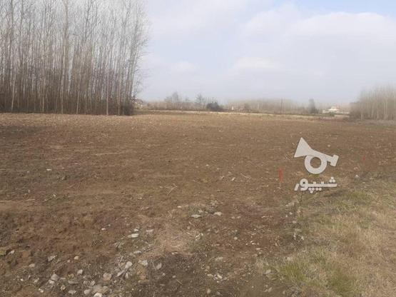 فروش زمین مسکونی 376 متر در صومعه سرا در گروه خرید و فروش املاک در گیلان در شیپور-عکس6