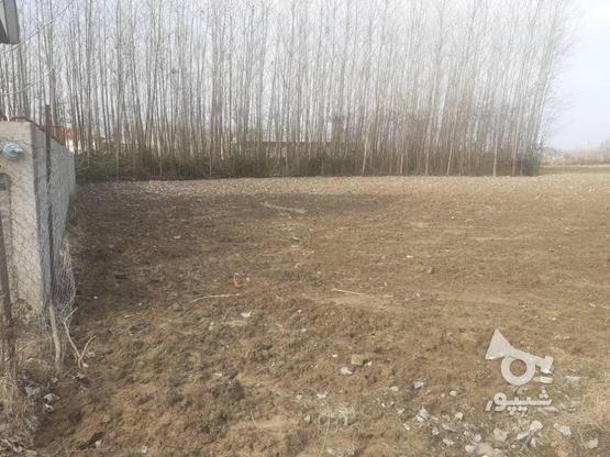 فروش زمین مسکونی 376 متر در صومعه سرا در گروه خرید و فروش املاک در گیلان در شیپور-عکس7