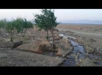 زمین و باغ بادام 2000 متری در شیپور-عکس کوچک