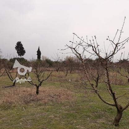 فروش زمین خانه  باغی 1100 دراز محله کیلومتر 3ساری در گروه خرید و فروش املاک در مازندران در شیپور-عکس3