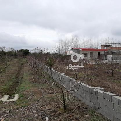 فروش زمین خانه  باغی 1100 دراز محله کیلومتر 3ساری در گروه خرید و فروش املاک در مازندران در شیپور-عکس8
