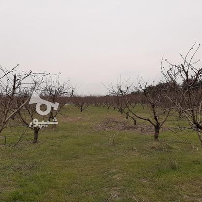 فروش زمین خانه  باغی 1100 دراز محله کیلومتر 3ساری در گروه خرید و فروش املاک در مازندران در شیپور-عکس2