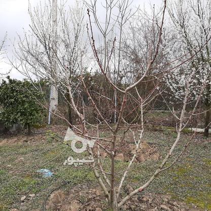 فروش زمین خانه  باغی 1100 دراز محله کیلومتر 3ساری در گروه خرید و فروش املاک در مازندران در شیپور-عکس7