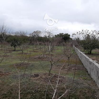 فروش زمین خانه  باغی 1100 دراز محله کیلومتر 3ساری در گروه خرید و فروش املاک در مازندران در شیپور-عکس6