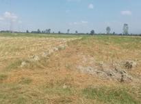 فروش زمین خشکه زاری در شیپور-عکس کوچک