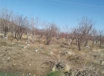 دو هکتار باغ صفادشت خوانسار در شیپور-عکس کوچک