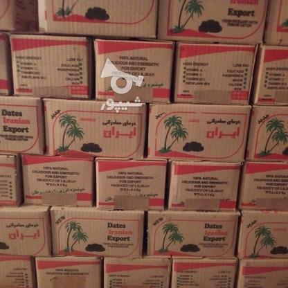 خرما.کبکاب.گنتار زاهدی سمرون در گروه خرید و فروش خدمات و کسب و کار در بوشهر در شیپور-عکس8