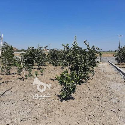 فروش زمین باغی 261 متر در جاده بابل بهنمیر در گروه خرید و فروش املاک در مازندران در شیپور-عکس3