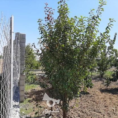 فروش زمین باغی 261 متر در جاده بابل بهنمیر در گروه خرید و فروش املاک در مازندران در شیپور-عکس5