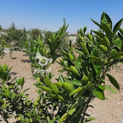 فروش زمین باغی 261 متر در جاده بابل بهنمیر در گروه خرید و فروش املاک در مازندران در شیپور-عکس1