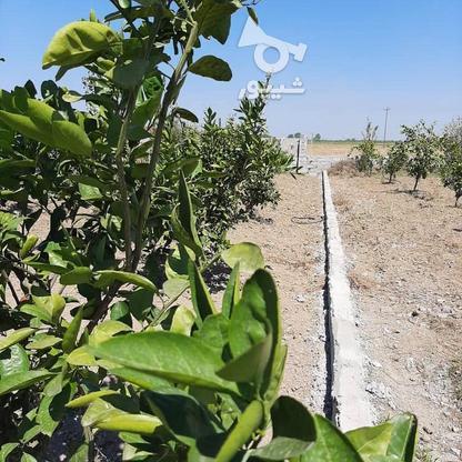 فروش زمین باغی 261 متر در جاده بابل بهنمیر در گروه خرید و فروش املاک در مازندران در شیپور-عکس2
