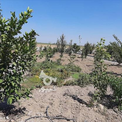 فروش زمین باغی 261 متر در جاده بابل بهنمیر در گروه خرید و فروش املاک در مازندران در شیپور-عکس6