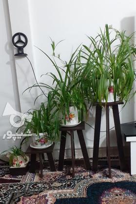 گل طبیعی سرحال در گروه خرید و فروش لوازم خانگی در البرز در شیپور-عکس1