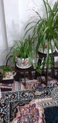 گل طبیعی سرحال در گروه خرید و فروش لوازم خانگی در البرز در شیپور-عکس2