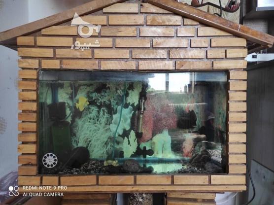 آکواریوم با ماهی و تمام وسایل در گروه خرید و فروش ورزش فرهنگ فراغت در تهران در شیپور-عکس2