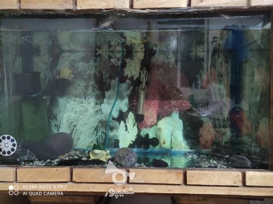 آکواریوم با ماهی و تمام وسایل در گروه خرید و فروش ورزش فرهنگ فراغت در تهران در شیپور-عکس4