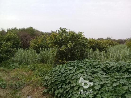 فروشی یامعاوضه زمین  در گروه خرید و فروش املاک در خوزستان در شیپور-عکس2