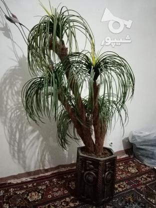 درخت نخل مصنوعی در گروه خرید و فروش لوازم خانگی در تهران در شیپور-عکس1