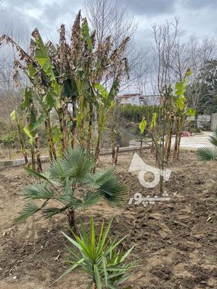 فروش ویلا 200 متر در تنکابن در گروه خرید و فروش املاک در مازندران در شیپور-عکس1