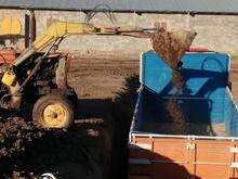کود مرغی قفسی سالم درجه یک  در شیپور
