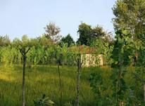 زمین به مساحت 2535متر،چندمتری جاده،امتیازات کامل در شیپور-عکس کوچک