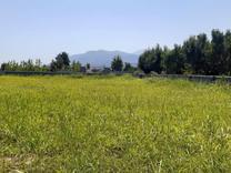 فروش زمین مسکونی 5000 متر در نوشهر در شیپور