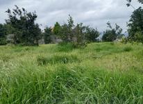 زمین مسکونی 1100 متر آمل در شیپور-عکس کوچک