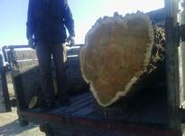خرید و برش درخت در شیپور-عکس کوچک