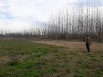 فروش زمین مسکونی 1000 متر در صومعه سرا در شیپور